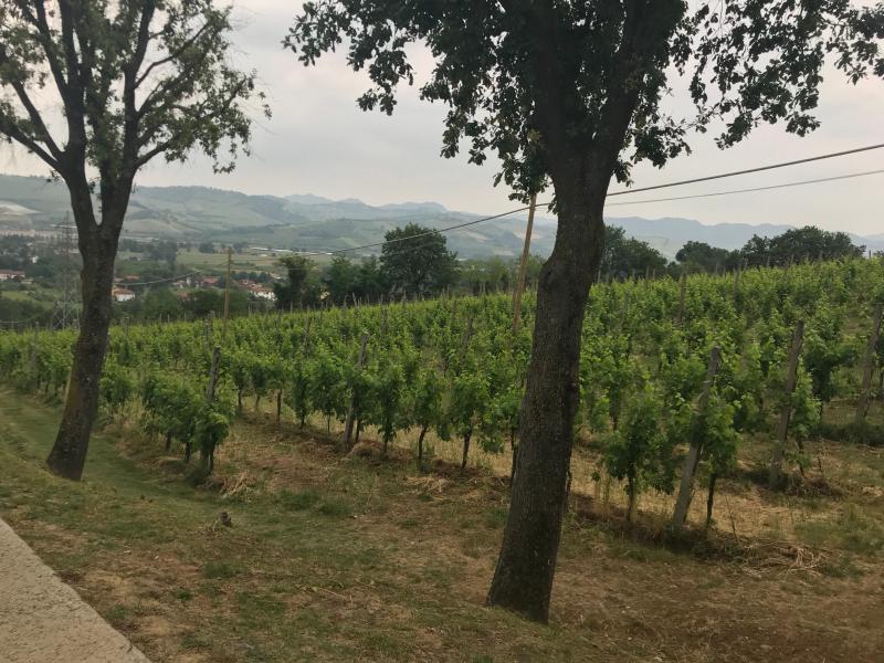 collina vigneto vini giovannini imola